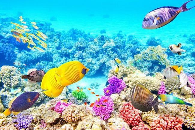 Great-barrier-reef-12