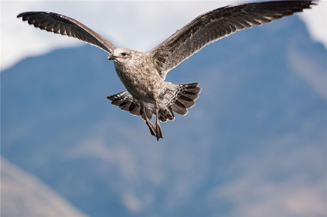7-best-fast-shutter-speed-photography-examples-a-flying-eagle-7