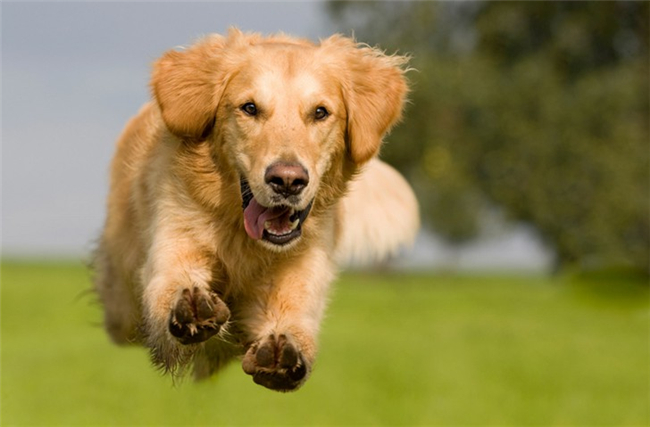 7-best-fast-shutter-speed-photography-examples-a-running-dog-4