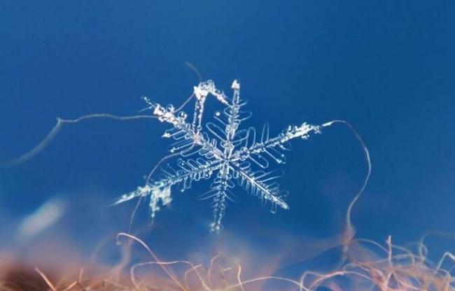 12-best-winter-photoshoot-ideas-micro-shot-of-snowflake